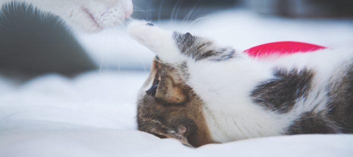 5 Common Kitten Health Problems
