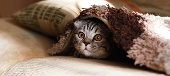 Kitten-Proofing Your Home: 10 Essential Tips