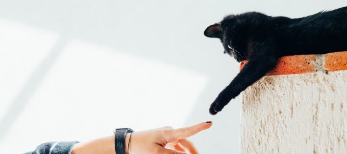 6 Tips for Raising an Affectionate Cat