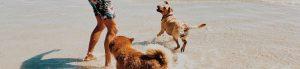 pet insurance explained