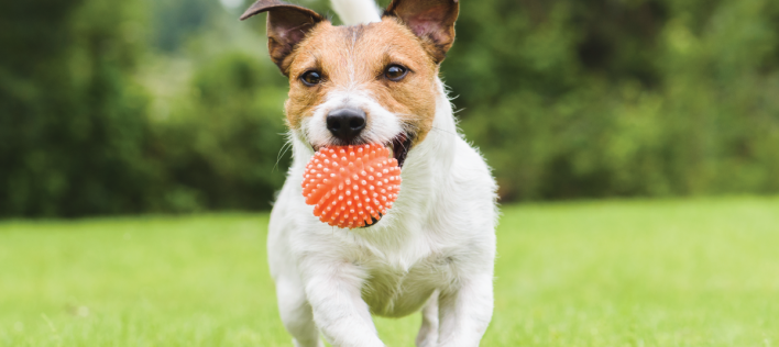 Knose named Pet Insurance Provider of the Year